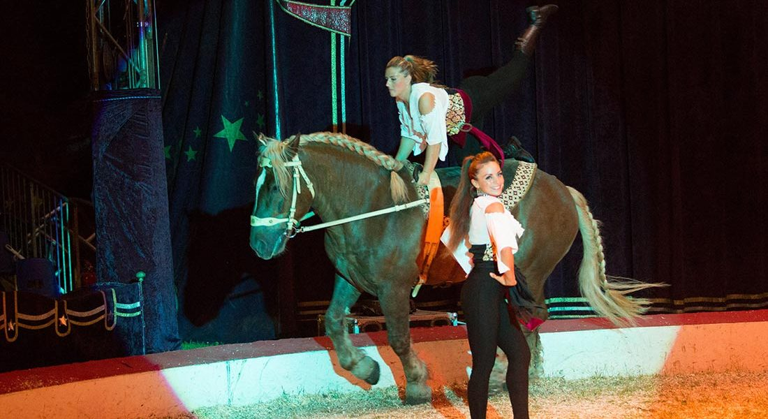 Reiten im Zirkuszelt