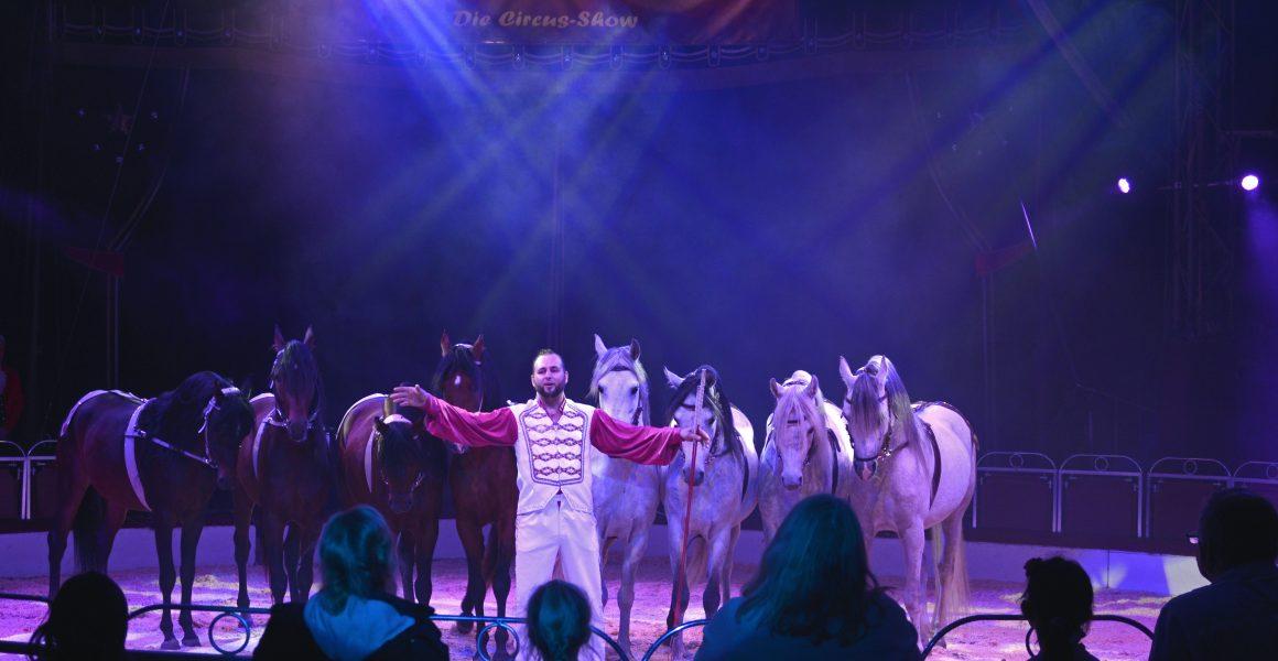 Pferde-Freiheit